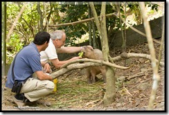 Feeding a Capabarro. (Largest rodent in the world)